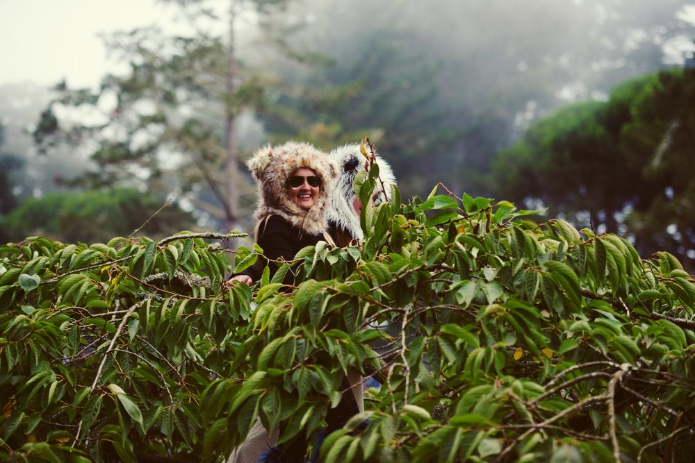 A wild panda appears. (Brian Valdizno/treeswingers)